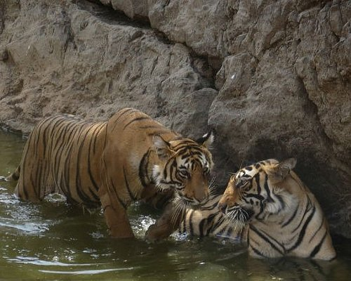 Ranthambore Tiger Safari Day Tour