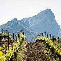 Nos vignes et la montagne de l'Hortus