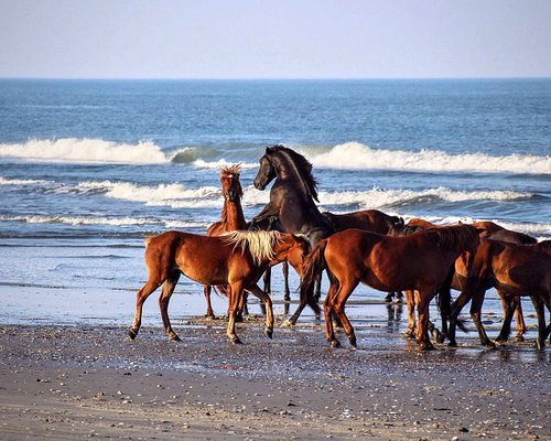 2 stallions fighting over the mares!