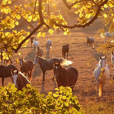 Le troupeau des Chevaux du Verdon : une famille de chevaux au coeur de la Provence.