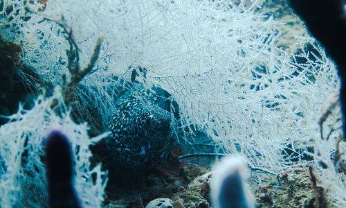 bocas del toro marine life