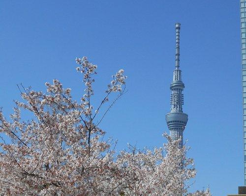 錦糸町公園の桜とスカイツリー