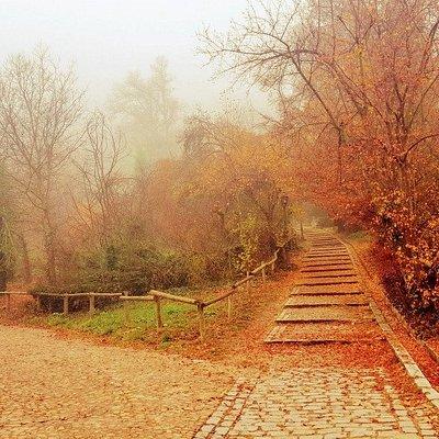 estallido de otoño en la Alameda..!