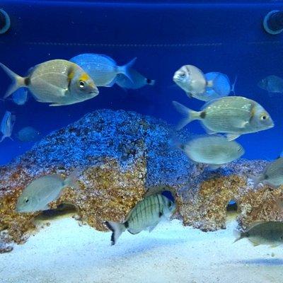 Διάφορα ψάρια του Ιονίου πελάγους