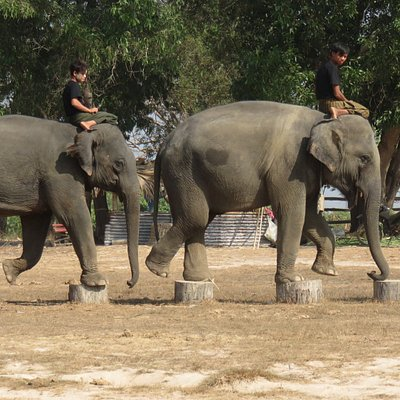 skills they need whn they become timber elephants.
