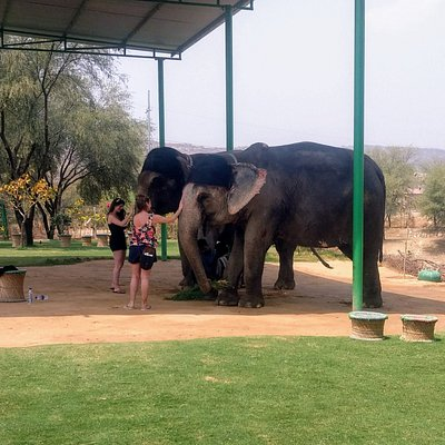Bond with these beautiful Pachyderms on your own.