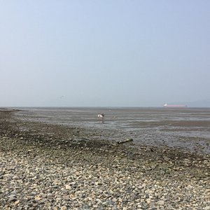 Just a quick stop & lookout in the park. Tide was out & people were our digging clams. Sitting a