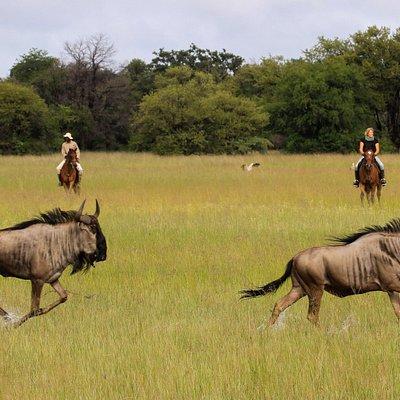 Horse safaris at Camelthorn Lodge, Hwange National Park