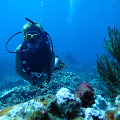 Diving in Sodwana, you will see a vast diversity of marine life