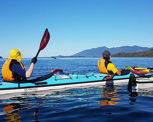 Watching grey whales feed from our kayaks in Clayoquot sound.
