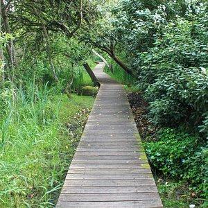 On visite le marais à pied uniquement, en empruntant un parcours constitué d'un petit sentier su