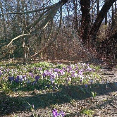 Der Frühling lässt sich blicken!
