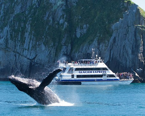The Glacier Express and a breaching humpback in the Chiswell Islands.