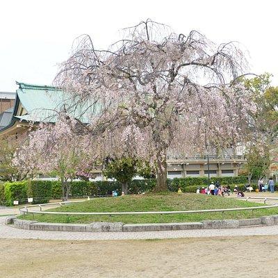 Okazaki Park (1)
