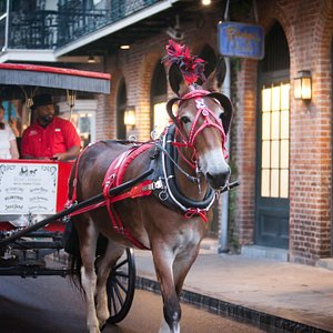 Royal Carriages was awarded the 2018 Louisiana Attraction of the Year Award