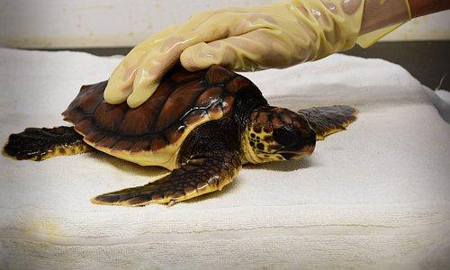 Il Centro di Recupero è gestito da Fondazione Cetacea Onlus e sopravvive grazie a donazioni priv