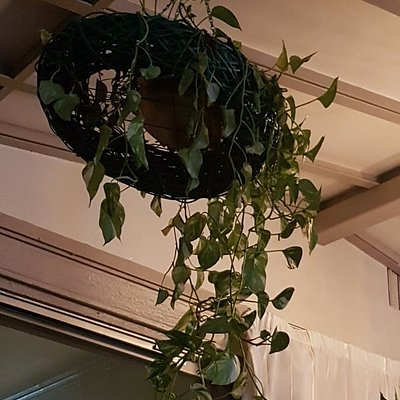 """Would you have this """"decoration"""" in your lounge. Then why go to Dooleys to look at these?  Tired"""
