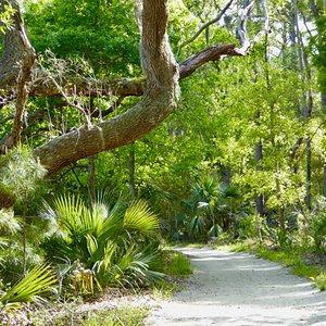 Indian Mound Trail showing flora