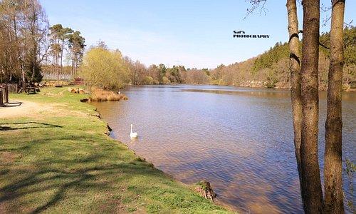 Rheinböllen Wild Park Germany