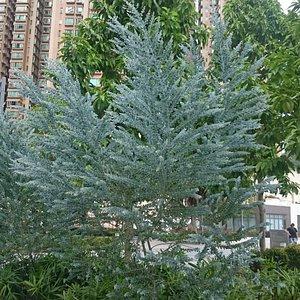 Pui Shing Garden