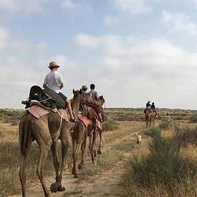 Sandman Camels