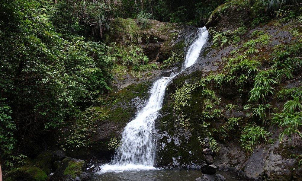 Waiotemarama Falls near Waipoua Forest