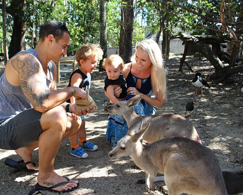 Hand Feed Kangaroos!