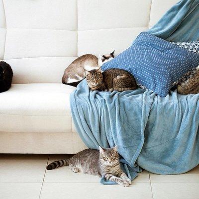 Так котики отдыхают все вместе )
