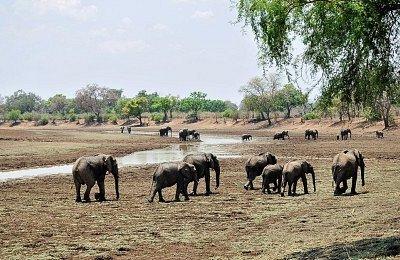 dry  season   in south  luangwa    with  budget  safari  tours
