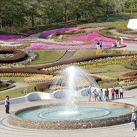 Flowers garden in April 2018
