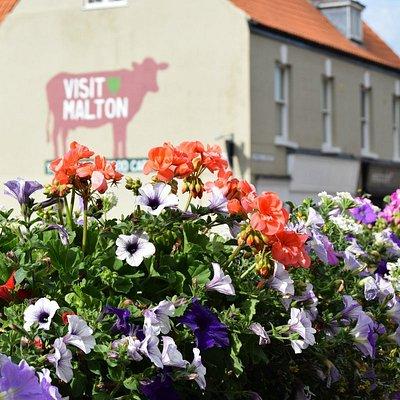 Visit Malton Festival Cow