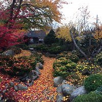 Falling leaves create a new vision of the garden at the Nikkei Internment Memorial Centre