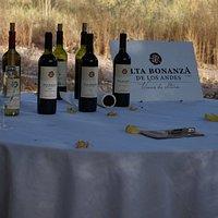 Los vinos a degustar