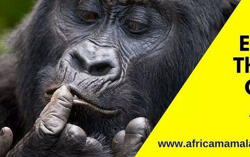 Explore The Best Of East Africa