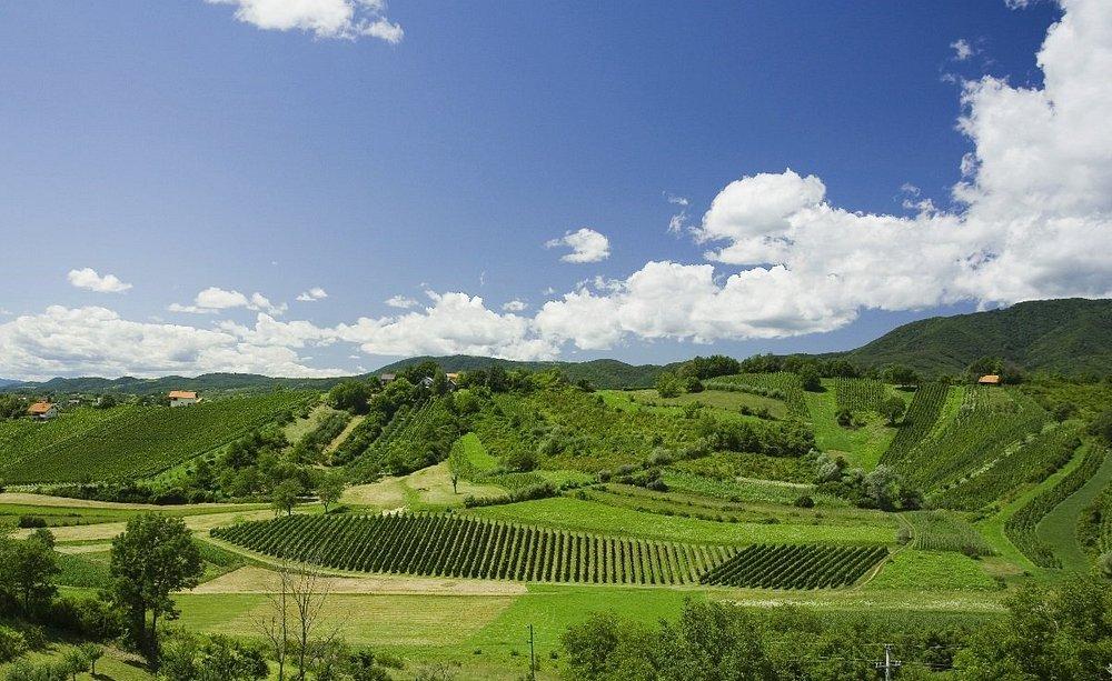 Plesivica - vineyards