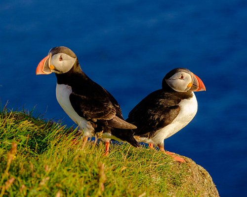 Two puffin friends looking good!