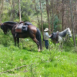 Placid strong horses