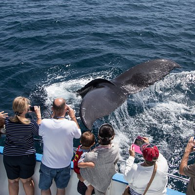 Whale Watchers Viewing Humpback Whale On Cruise