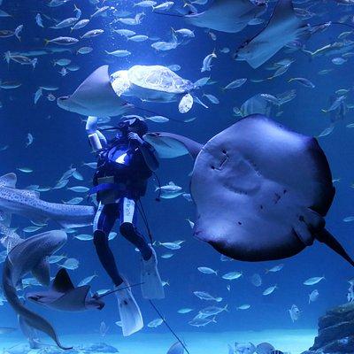 얼라이브 아쿠아리움 대구 : 바다친구 맘마쇼