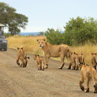 Open Vehicle Safaris in the Kruger National Park