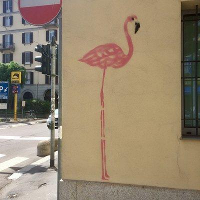 A Pink Flamingo around Milan!