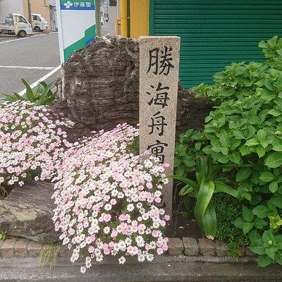 綺麗な花に囲まれてます。