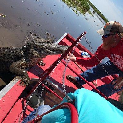 alligator tour gone wild