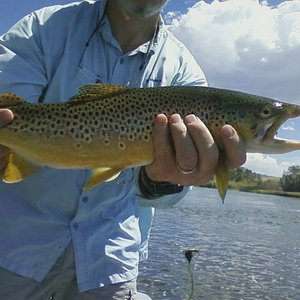 Experience Wyoming Fly Fishing on the Upper North Platte River, Miracle Mile,Snowy Range Alpine