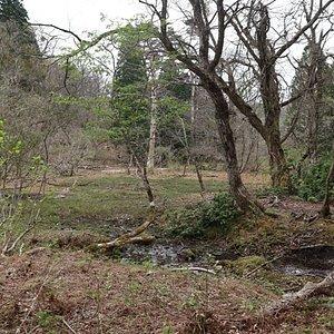 湿原ながらも乾燥化が進行しているそうだ。