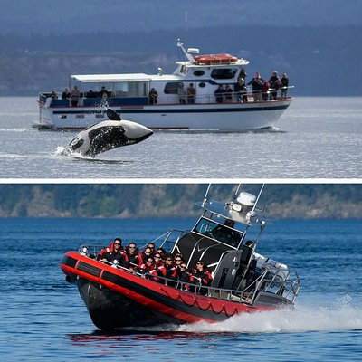 Two boats, two great whale watching adventures in the San Juan Islands!