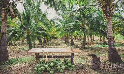 Coconut Farm Tasting Tour