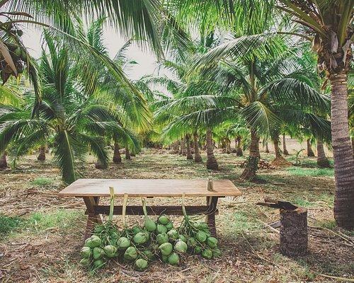 Coconut Farm Tasting Tour