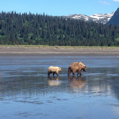 On the tidal flats we get very intimate with the bears.