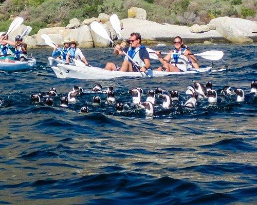 Penguins swimming near our kayaks